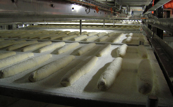 Baguette bread on boards inside the step-tower proofer of Alitech